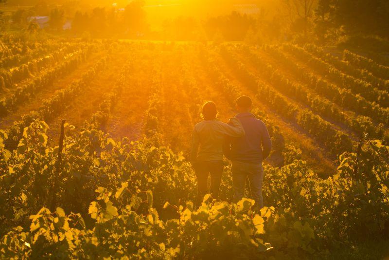 Coucher de soleil - Domaine des Cotes d'Ardoises