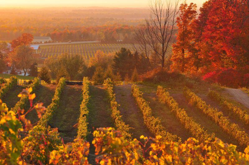 Couleur d'automne sur La Route des vins