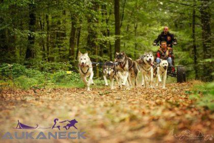 Aukaneck Aventure